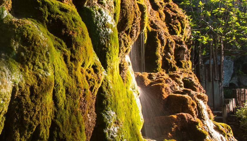 img-les-fontaines-petrifiantes-quand-leau-transforme-le-vegetal-en-mineral